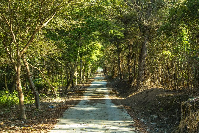 Hualien Totoro Forest Motorbiking-Suitable for everyone!