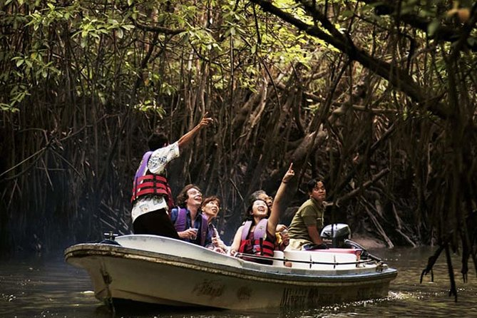 Langkawi Mangrove Forest Tour