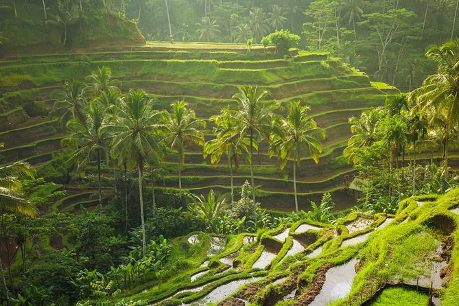 Ubud Tour : Monkey Forest and Tegalalang Rice Terraces Full day
