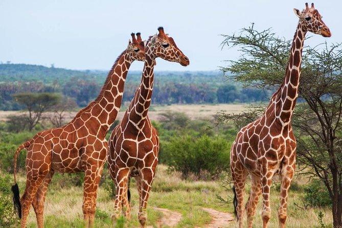 5 days Classic Tanzanian Safari