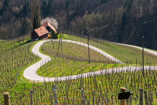 Private Maribor, Ptuj & Wine Road from Bled