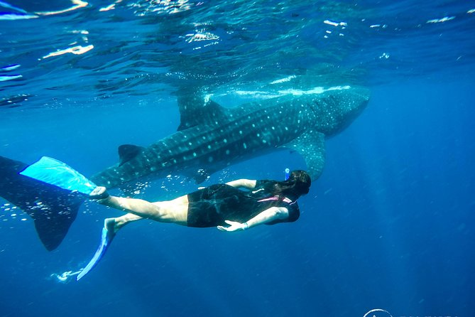 Whale Shark Encounter Full-Day all inclusive Tour from Riviera Maya