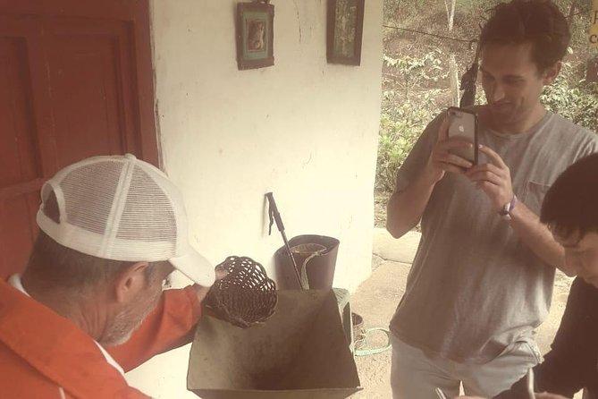 Private Full-Day Coffee Tour to Palmitas farm near Medellín