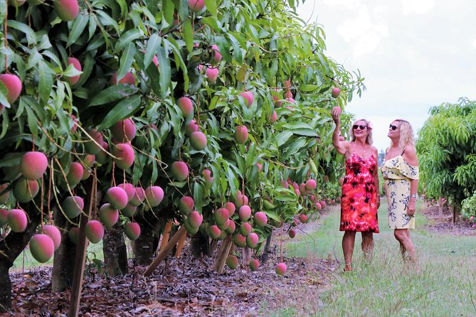 Boutique Atherton Tablelands Small-Group Food and Wine Tasting Tour from Cairns photo 22