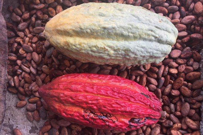 Guayaquil to Cuenca one-way tour with Cajas Park and a Cacao Farm