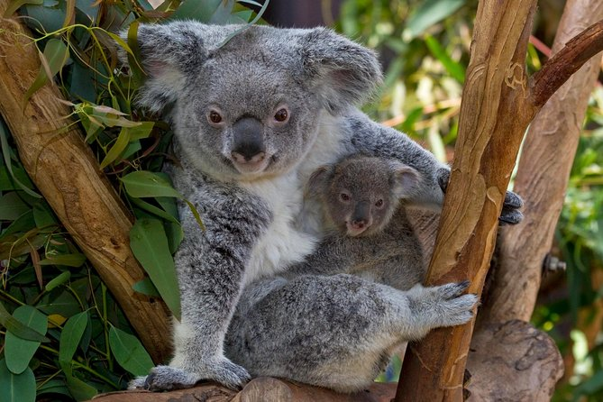 San Diego Zoo Transportation And Admission 2019