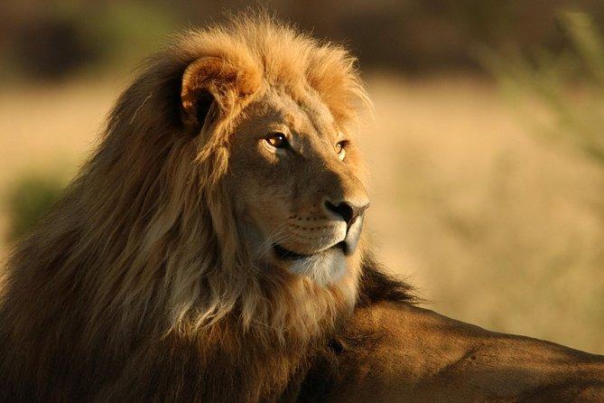 Gir National Park Wilderness Escape