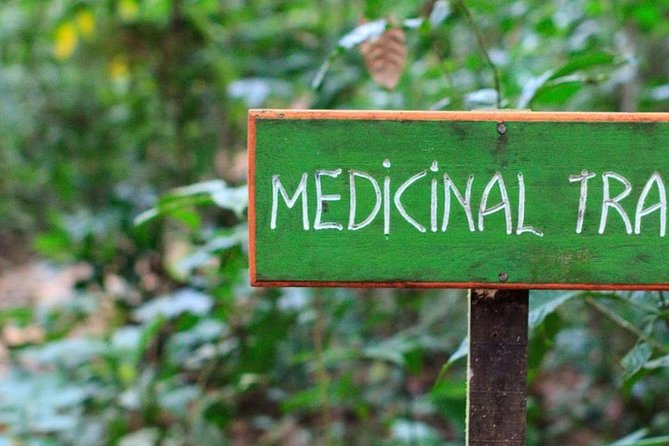 Medicinal Trail guided by a Mayan Shaman