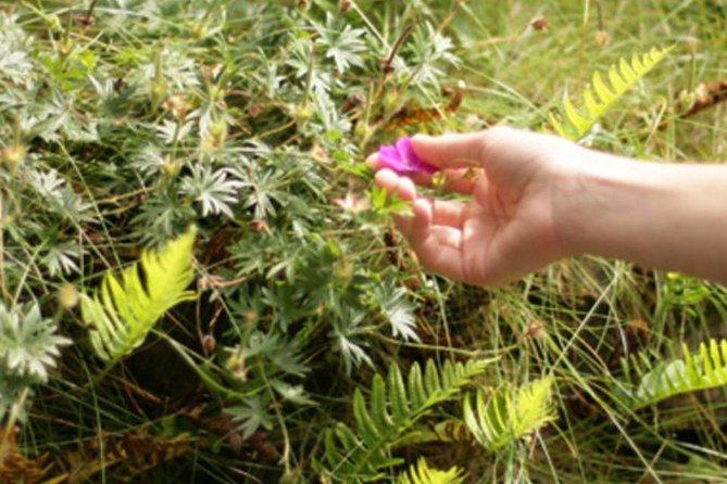 Food foraging & bottled medicine