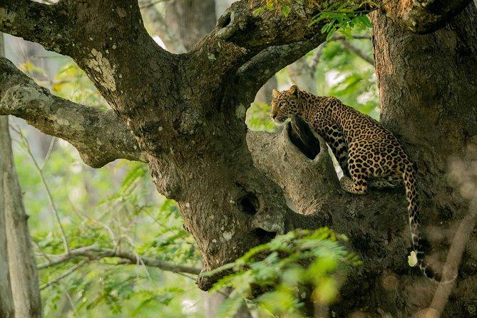 Kabini Nagarhole national park from Bangalore