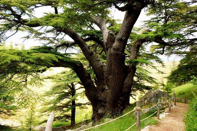 Qadisha Valley & Cedars Forest Tour