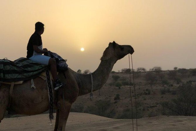 1 Night Camel Safari Tour In Jodhpur