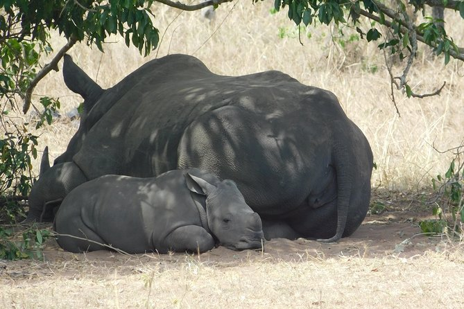 3 Day Safari Experience(Murchison Falls National Park) photo 7