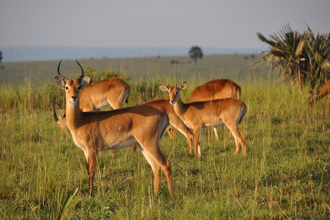 3 Day Safari Experience(Murchison Falls National Park) photo 10