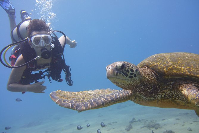 PRIVATE 2 Person Intro Scuba Dive, Try Scuba Diving! Only $449 For Both Divers photo 1