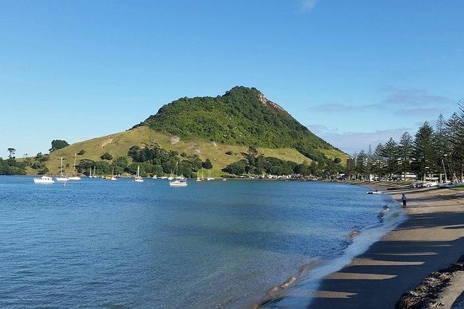 Shore Excursion: Tauranga Morning Highlights - with FREE lunch