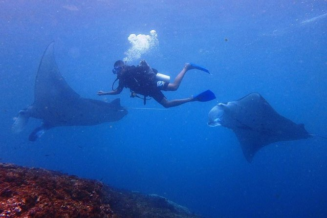From Bali: Beginner Scuba Diving Day Trip to Nusa Lembongan and Nusa Penida