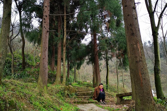 Off -the-Beaten-Track Tea Hill Walking Tour & Taoist-Temple Visit photo 3