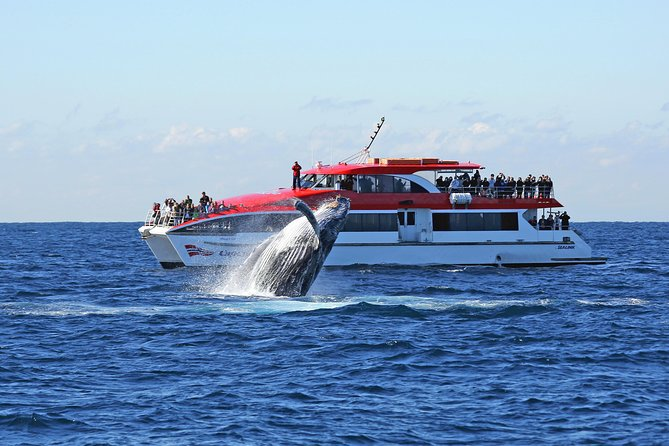 Sydney Hop-on-Hop-off Cruise and Whale Watching Cruise