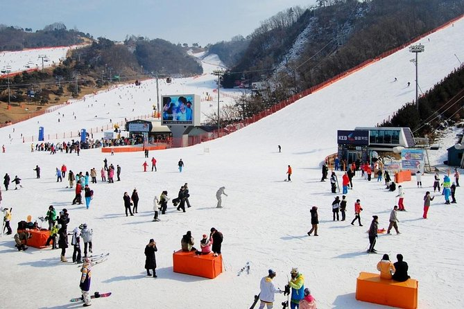 Day Trip to Nami Island and Gangchon Elysian Ski Resort from Seoul photo 3