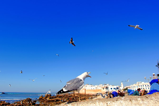 Private Day Tour from Marrakech to Essaouira, Morocco
