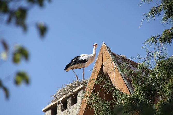 Fes to Ifrane Private Day Tour