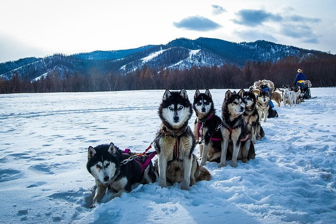 Dog sledding & Chinggis Khaan Statue tour photo 1