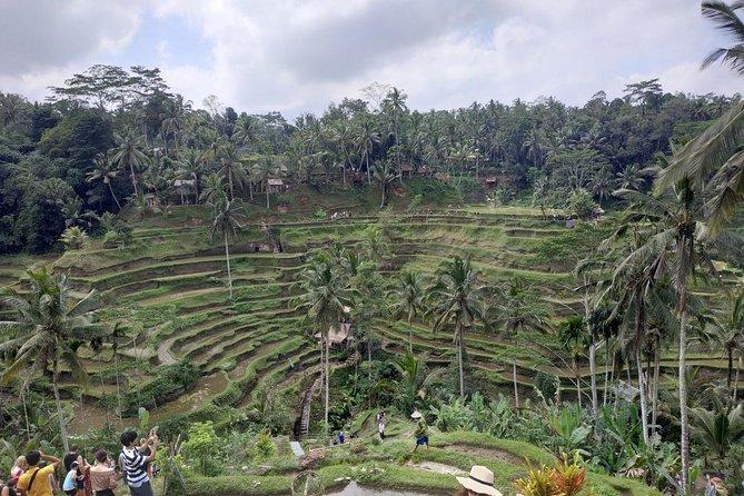 Ubud, Kintamani Volcanos Bali tour