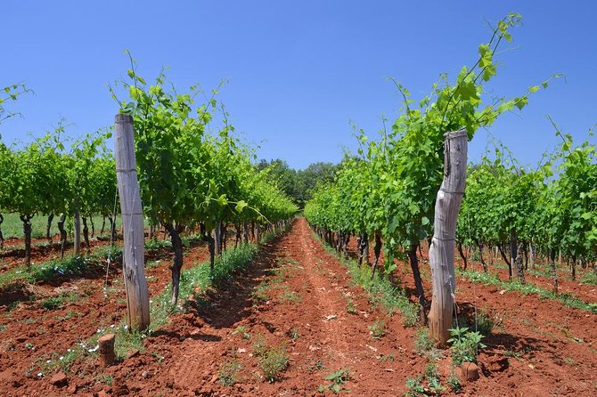Slovenian Istra Wine Tour from Slovenian Coast