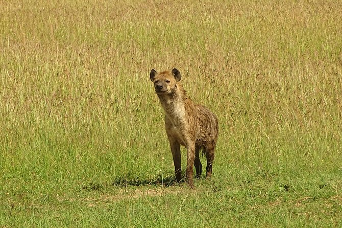 4-Day Masai Mara - Lake Nakuru Safari (Small group) photo 9
