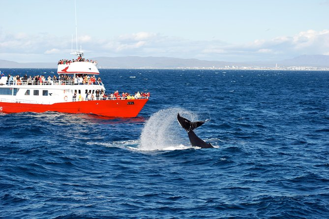 Golden circle and Whale watching in Reykjavik photo 11