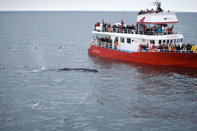 Golden circle and Whale watching in Reykjavik photo 3