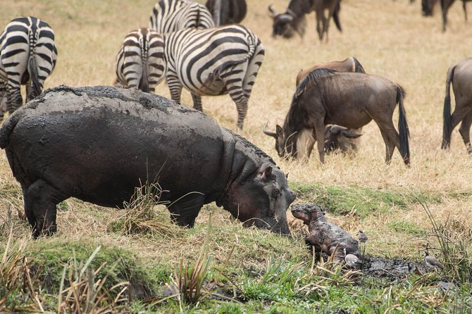 9 days Safari to Serengeti, Ngorongoro Crater, Maasai, Sonjo and Datuga tribes