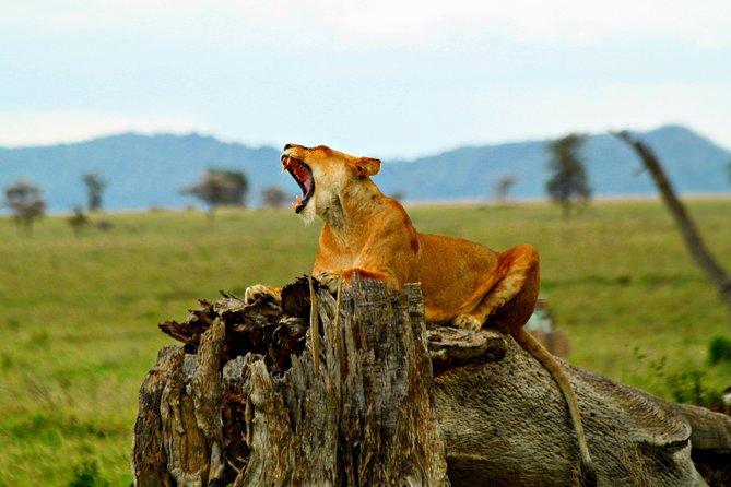 4 Day Joined Group Safari Ngorongoro, Manyara,Tarangire and Arusha National Park