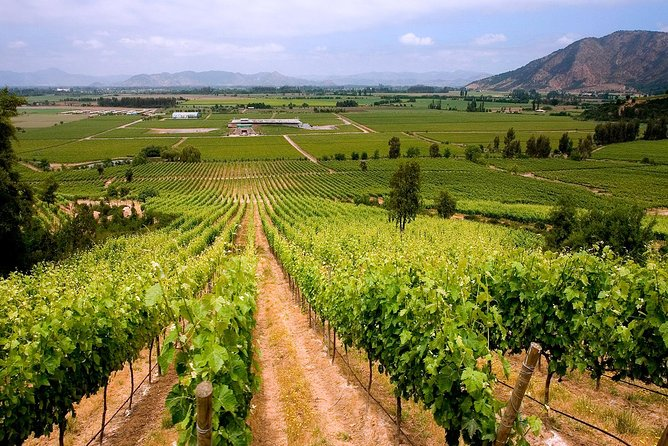 Colchagua Valley, wine tour full day