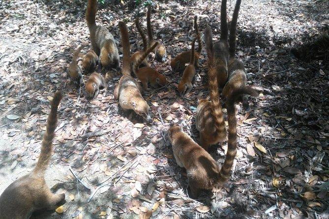 El Corchito Cenotes Natural Reserve & Beach Break Excursion