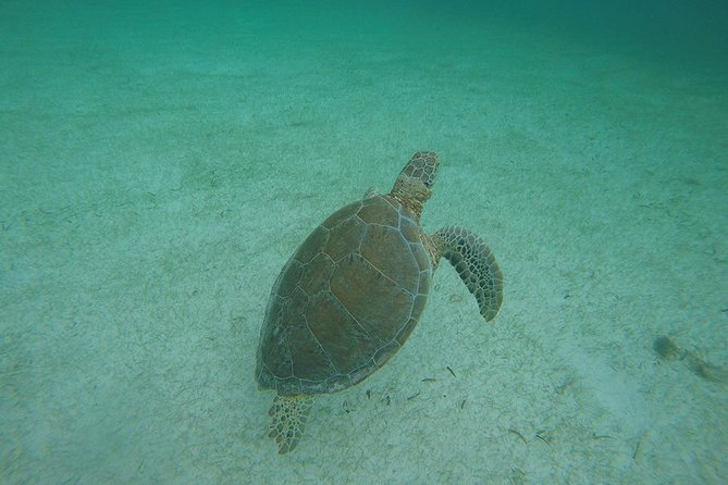 Private Tour: Akumal Marine Turtle Snorkeling from Cozumel