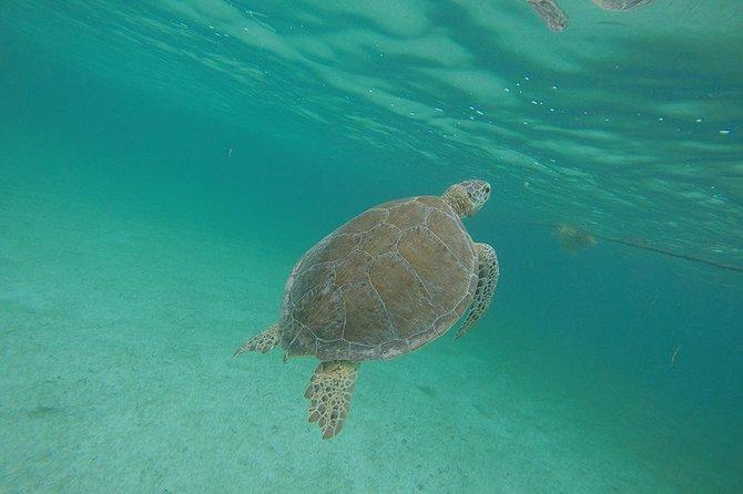 Private Tour: Akumal Marine Turtle Snorkeling and Cenote Adventure