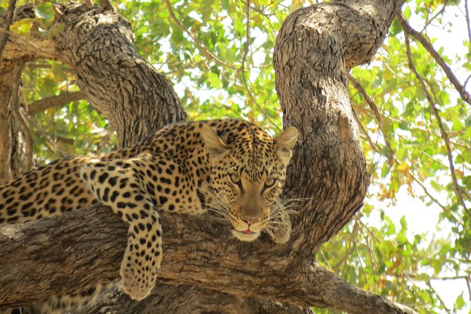 6 Days Moremi Game Reserve, Savuti and Chobe National Park,Botswana