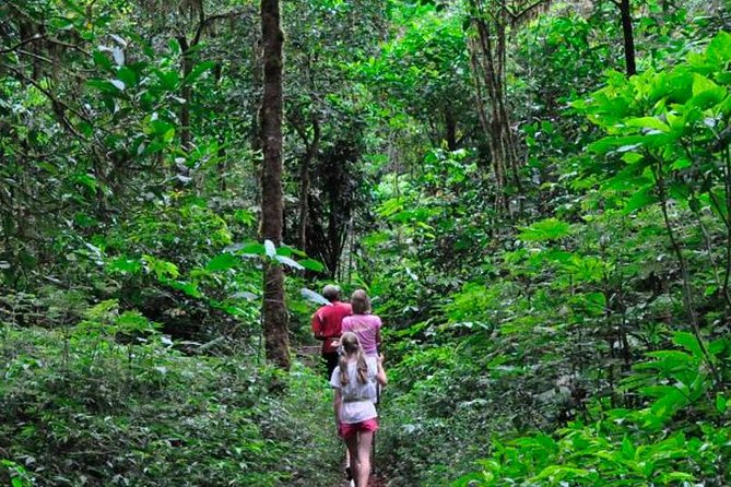 Sinharaja Rain Forest Trekking Trip From Kalutara & Wadduwa- All Inclusive