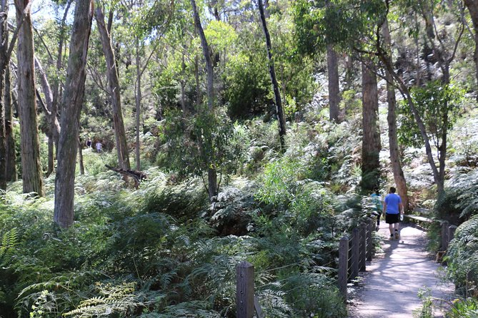 HIking from Waterfall Gully