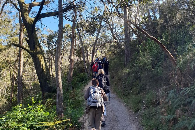 Mount Lofty Hike and Cleland Wildlife Park Day Trip from Adelaide