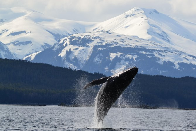 Juneau Shore Excursion: Whale-Watching Cruise and Tracy's King Crab Combo