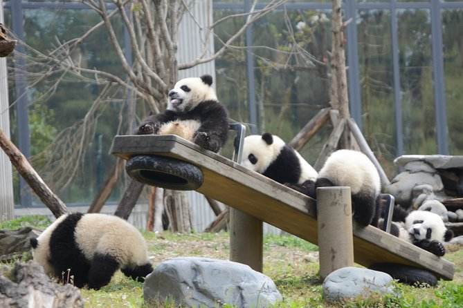 Wolong Panda Base Private Day Tour with Optional Volunteering