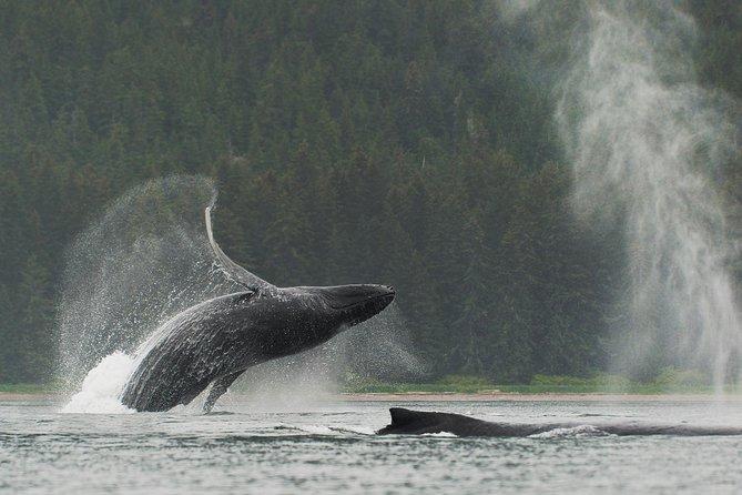 Juneau Shore Excursion: Paddle with Whales! Kayak Adventure
