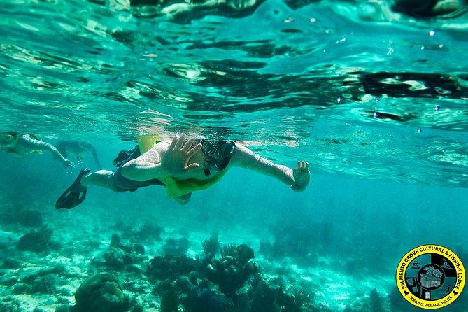 Barrier Reef Snorkeling & Food tour