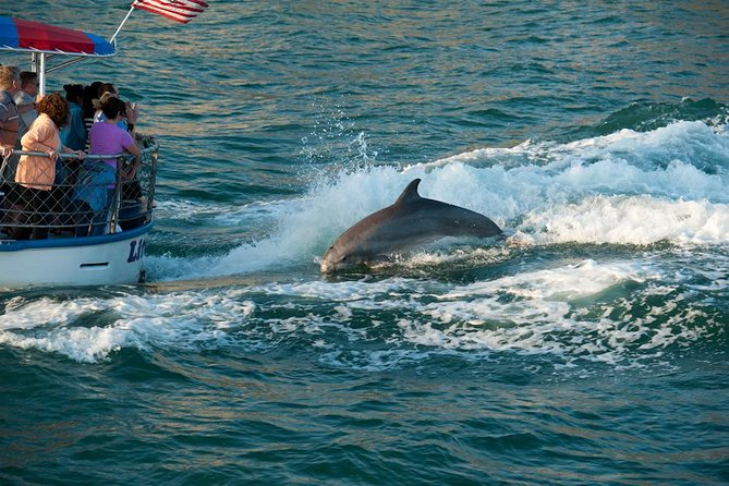 Clearwater Beach Day Trip from Orlando with Dolphin Encounter Cruise photo 2
