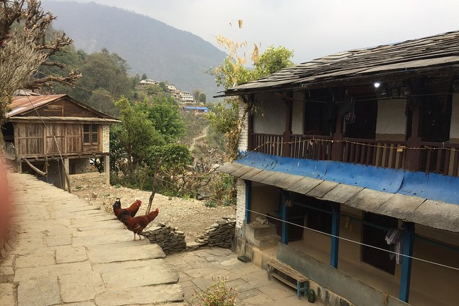 4 Nights 5 Days Easy Trek from Pokhara Valley