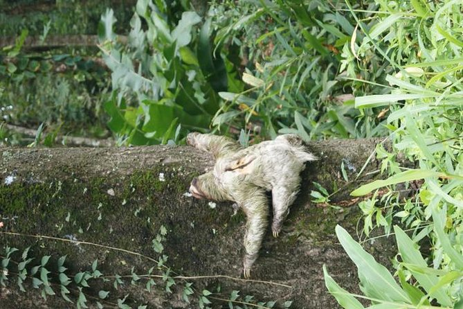 Gandoca-Manzanillo Refuge Jungle Hike