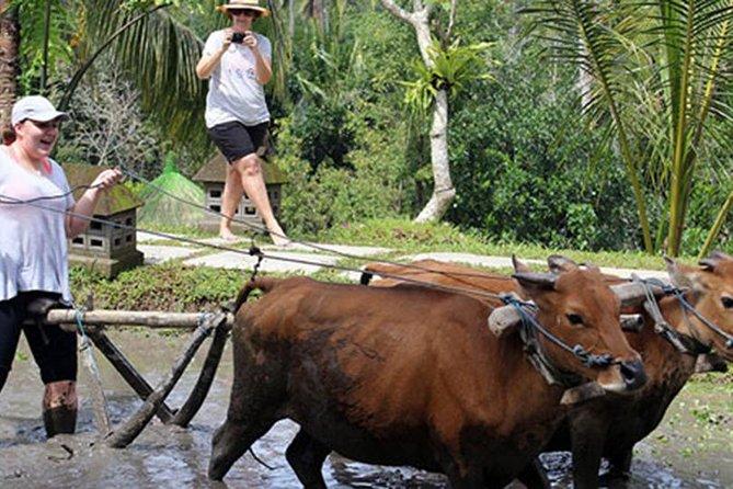 Bali Ubud Rice Terraces, Temples & Volcano